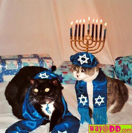 hanukkah-pet-2-cats