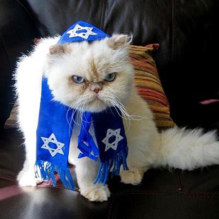 hanukkah-pet-angry-cat