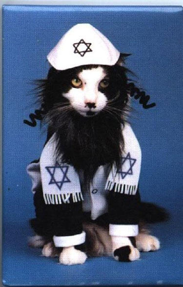 hanukkah-pet-cat-beard