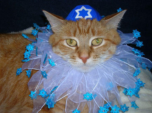 hanukkah-pet-cat-collar