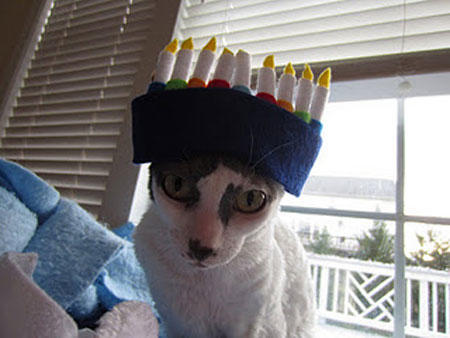 hanukkah-pet-cat-hat
