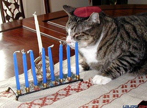 hanukkah-pet-cat-red