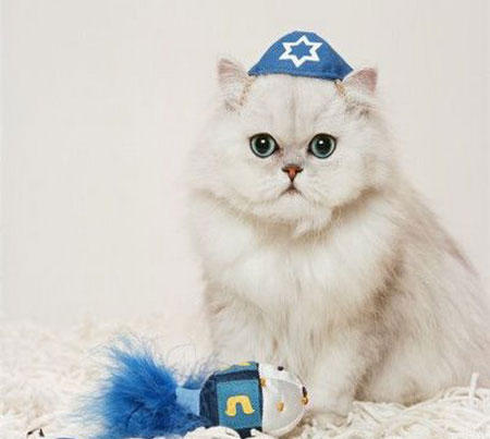 hanukkah-pet-fancy-feast