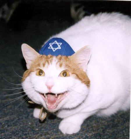 hanukkah-pet-snarl-cat